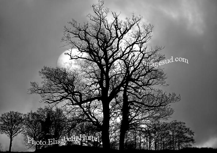 Luna de invierno, foto de paisaje en blanco y negro