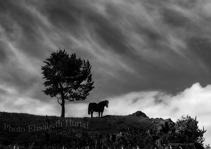 Un caballo y un árbol , foto de paisaje en blanco y negro