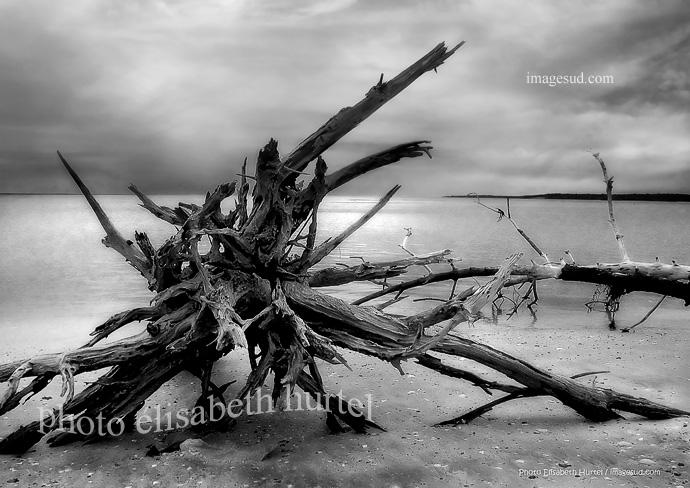 Playa salvaje de Oceania, paisaje marino en blanco y negro