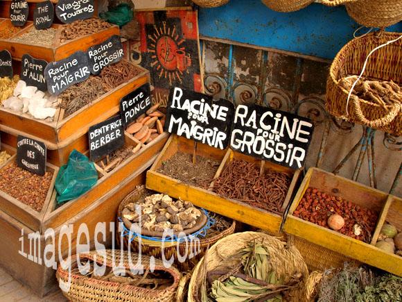 plantes médicinales au Maroc