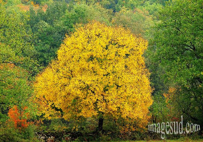 arbre-automne-p3-0058x