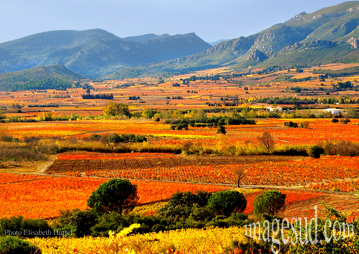 france-paysage-vignoble-automne-p-3530