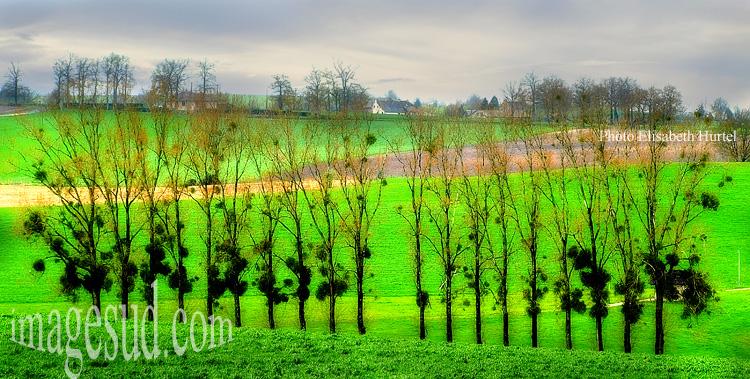 printemps-vert-france-p3-1613x