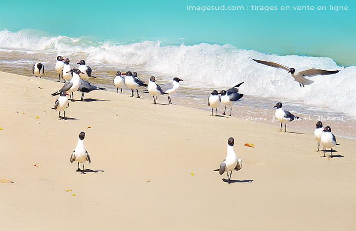 Photos de nature : mouettes sur une plage tropicale