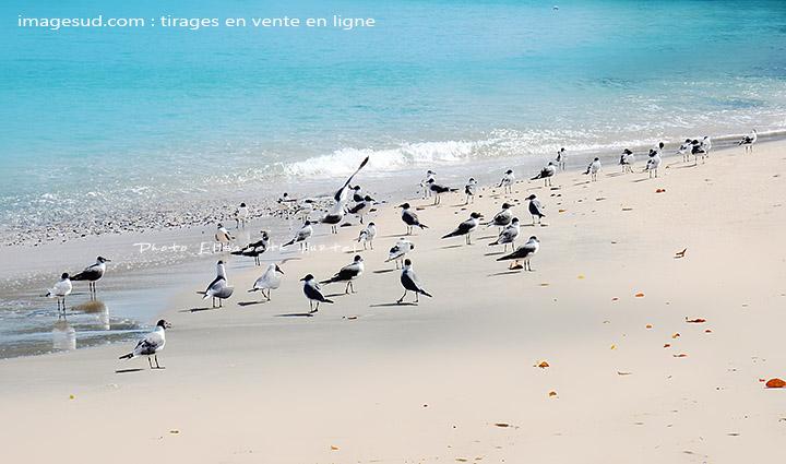 Photos de nature : mouettes au bord de l'eau