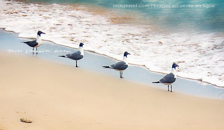 Nature, Mer et mouettes