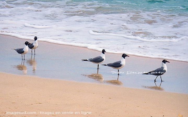 Nature : mouettes et vagues