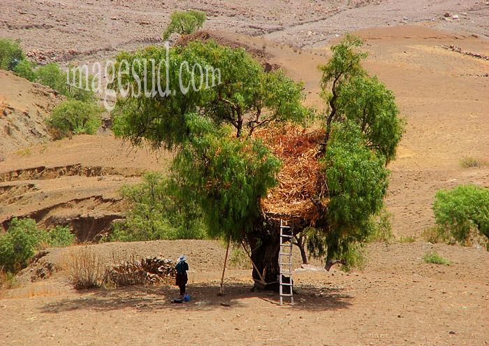 Arbre-grenier, agriculture dans les Andes de Bolivie