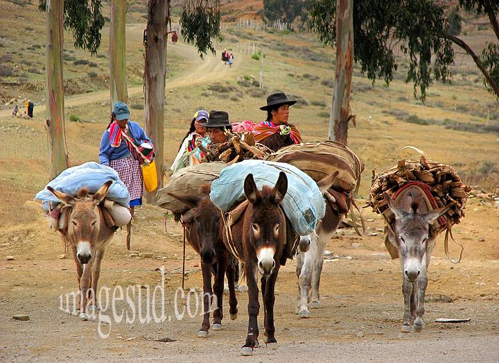 Les ânes des Andes : transport