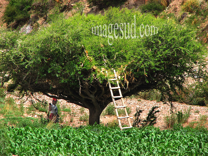 Arbre-grenier en Bolivie