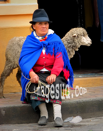 Cholita des Andes menant son mouton au marché, peuples indigènes des Andes, Equateur