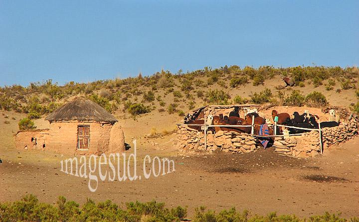Elevage de lamas en Bolivie : toute petite ferme d'élevage de lamas en Bolivie