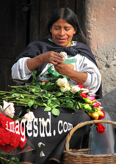 equateur-roses-8012
