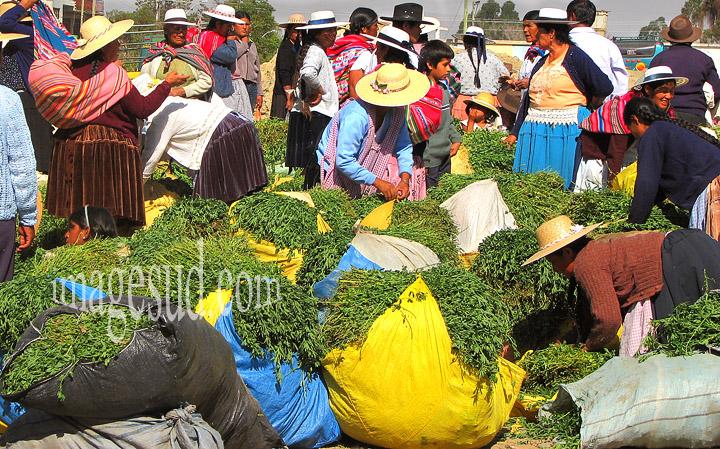 Bolivie : marché indigène