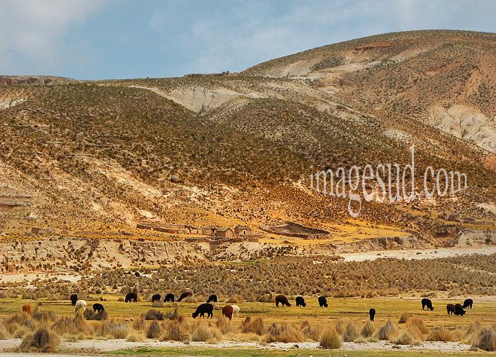 Paysage des Andes en Bolivie, photo haute résolution