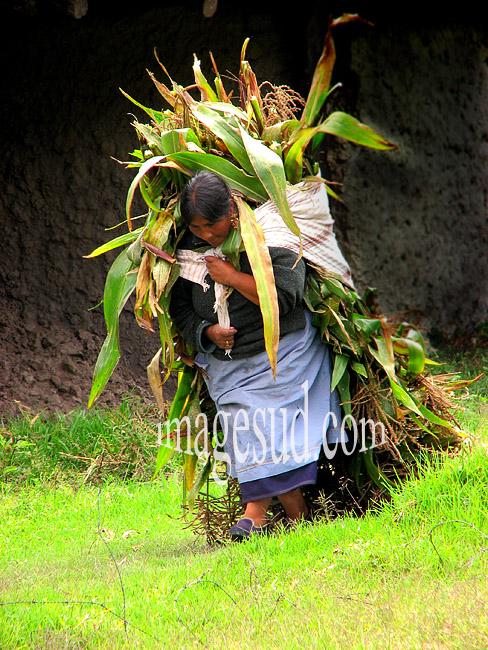 Paysanne avec une lourde charge de maïs sur le dos, Andes, Equateur