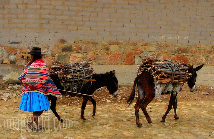 Bolivie : Vie quotidienne dans les Andes, corvée de bois