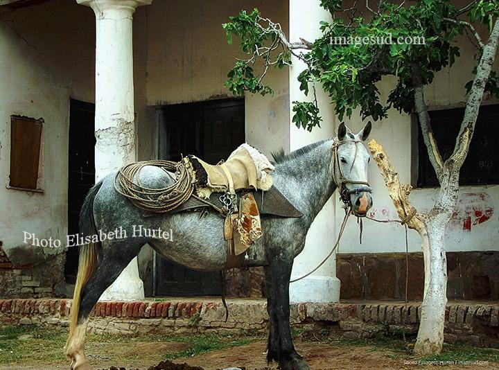 Cheval attendant son gaucho, Argentine