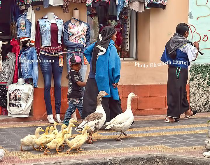 Rn route pour le marché des animaux, Otavalo, Equateur, Ecuador